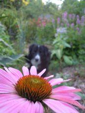 Momo flower