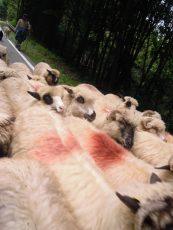 Nous ne sommes pas des moutons !